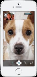 separation-anxiety-dog-dog-camera-2