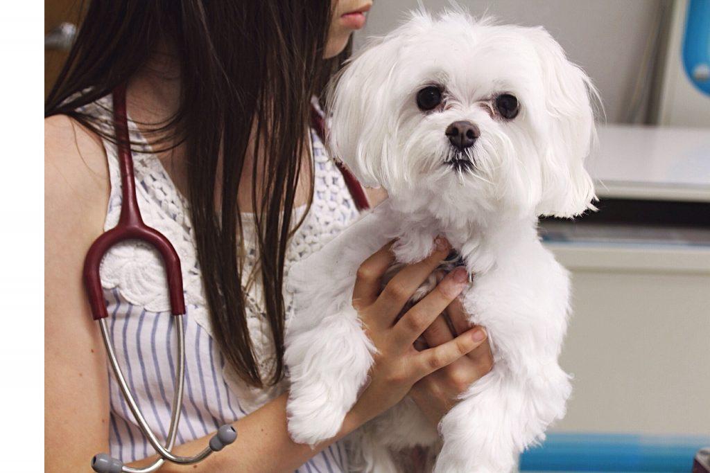 separation-anxiety-dog-at-vet