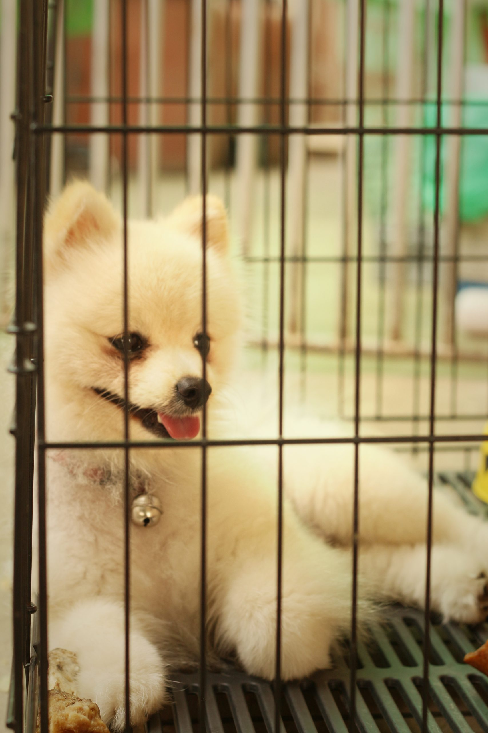 Dog in crate for potty training in west hartford